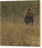 Grizzly Sow And Cub   #6365 Wood Print