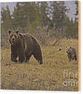 Grizzly Sow And Cub  #6382 Wood Print