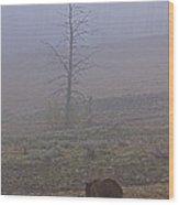 Grizzly Sow And Twins  #5817 Wood Print