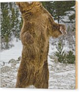 Grizzly Standing Wood Print