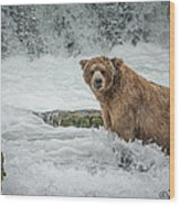 Grizzly Stare Wood Print