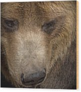 Grizzly Upclose Wood Print