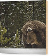 Grizzly's Courting Wood Print