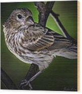 Grosbeak 1 Wood Print