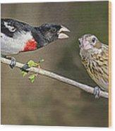 Grosbeak Gossip Wood Print
