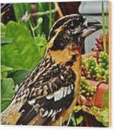 Grosbeak Profile Wood Print
