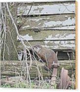 Ground Hog Day Wood Print