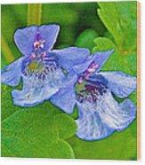 Ground Ivy Near Alamo-michigan Wood Print