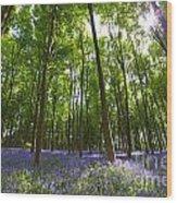 Ground Level Bluebells Wood Print