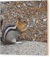 Ground Squirrel Wood Print