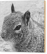 Ground Squirrel With Sandy Nose Wood Print