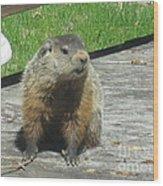 Groundhog Holding A Stick Wood Print