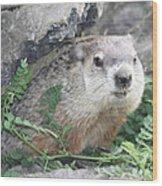 Groundhog Making Sure It Is Safe Wood Print by John Telfer