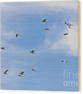 Group Of Egrets Flying Wood Print