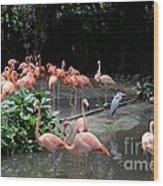 Group Of Flamingos And Lone Heron In Water Wood Print