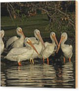 Group Of White Pelicans Wood Print