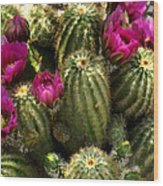 Grouping Of Cactus With Pink Flowers Wood Print