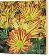 Grouping Of Gerbera Wood Print