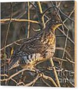 Grouse In A Tree Wood Print