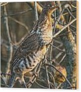 Grouse In An Apple Tree Wood Print