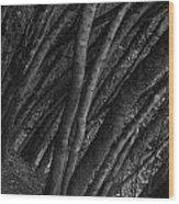 Grove Of Trees In Muir Woods Wood Print