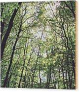 Grove Wood Print