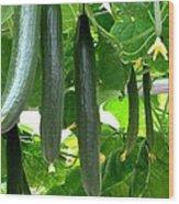 Growing Cucumbers Wood Print