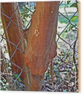 Growing Through The Fence Wood Print