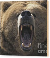Growling Grizzly Bear Wood Print by Mark Newman