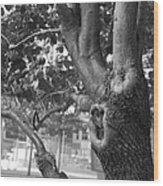 Growth On The Survivor Tree In Black And White Wood Print