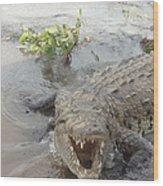 Grumpy Crocodile  Wood Print