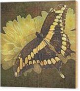 Grunge Giant Swallowtail-1 Wood Print