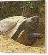 Florida Gopher Tortoise And Home Wood Print