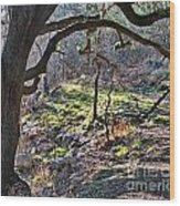 Guadalupe State Park Wood Print