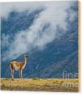 Guanaco Mother And Child Wood Print