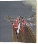 Guard Dragonfly... Wood Print