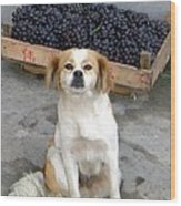 Guardian Of The Grapes Wood Print