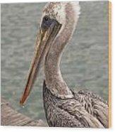 Guardian Pelican Wood Print