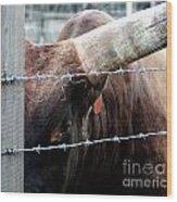 Guarding The Fence V2 Wood Print