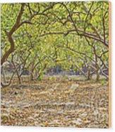 Guava Garden In Autumn Wood Print