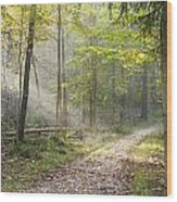 Guided Trail Wood Print