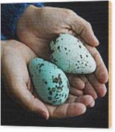 Guillemot Egg Wood Print