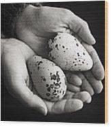 Guillemot Eggs Black And White Wood Print