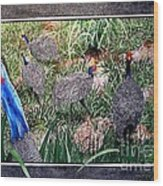 Guinea Fowl In Guinea Grass Wood Print