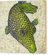 Guinea Fowl Puffer Fish In Green Wood Print