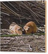 Guinea Pig Livestock At Lake Titicaca Peru Wood Print
