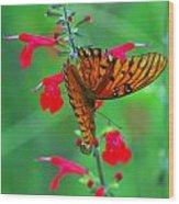 Gulf Fritillary 1 Wood Print