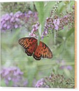 Gulf Fritillary Agraulis Vanillae-featured In Nature Photography-wildlife-newbies-comf Art Groups  Wood Print