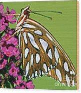 Gulf Fritillary Butterfly Agraulis Wood Print