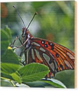 Gulf Fritillary Butterfly Close Up Wood Print